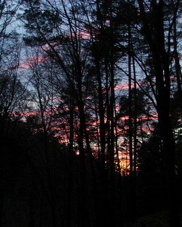 Wald am Abend 21.3.2014