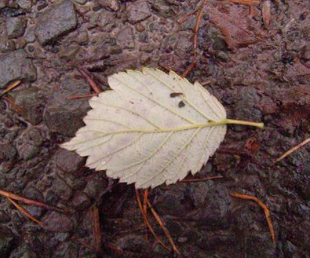 Herbst (27.11.09)
